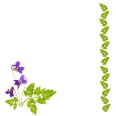 frame of grass with a bouquet of violets