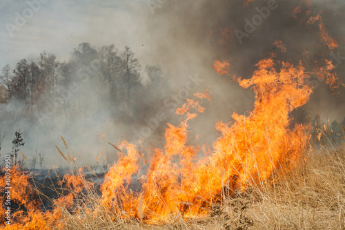 Big fire on agricultural land near forest