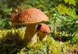 Leinwanddruck Bild - Two mushrooms in forest
