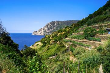 Wanderweg mit Blick auf Weinberge  und Meer in den Cinque Terre