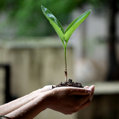 Two hands holding a young green plant