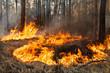 Leinwanddruck Bild - Forest fire in progress