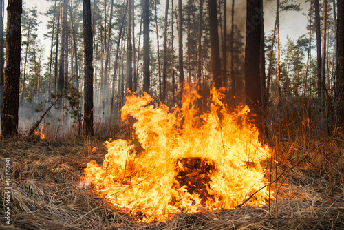 Flame is starting to damage the trunk on forest fire - 80762141