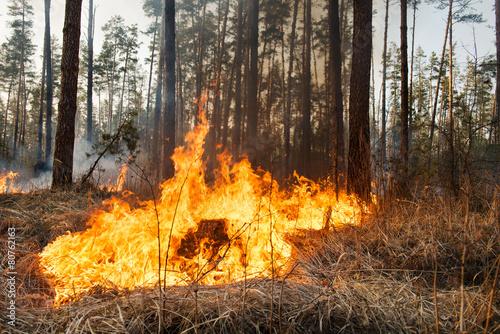 Development of forest fire - 80762163