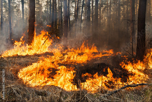 Forest fire in progress - 80762183