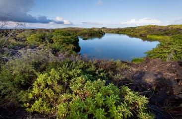 Beautiful colorful landscape of Flamingo Lake in Isabela Island