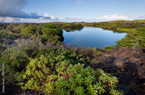 Leinwanddruck Bild Beautiful colorful landscape of Flamingo Lake in Isabela Island