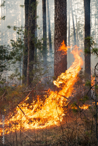 Big flame on forest fire