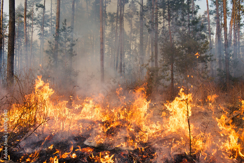 Forest fire in progress