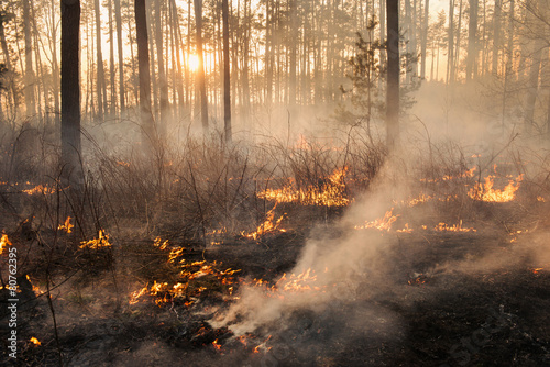 Development of forest fire on sunset background