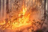 Development of forest fire