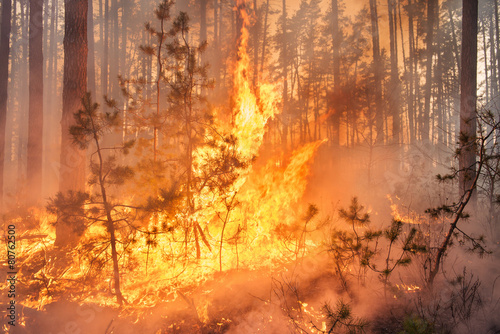 Development of forest fire - 80762500