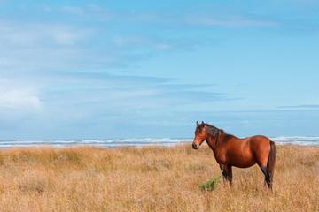 Wild horse on ocean shore