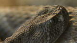 Rattlesnake - Crotalus mitchellii pyrrhus eyes moving poster