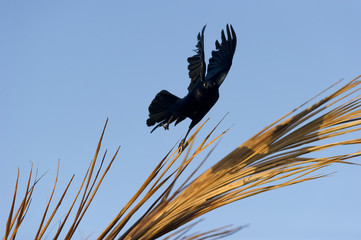 Spirit Mystic Sorcery Bird
