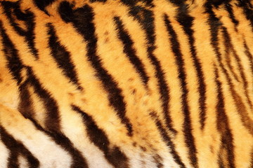beautiful tiger textured fur