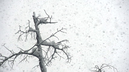 Snow Cyclone