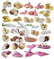 Radishes,jicama ,whole manioc (cassava) ,potatoes,purple yams ph