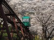 Leinwandbild Motiv Slope car passing through tunnel of cherry blossom (Sakura)
