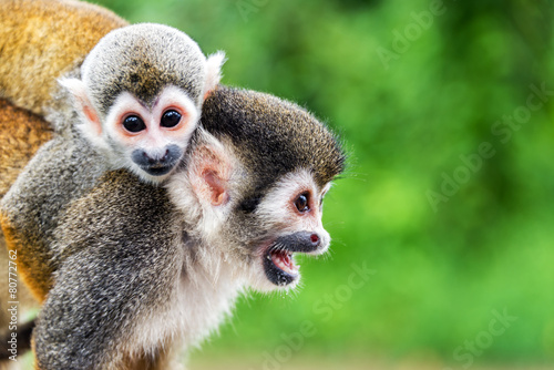 Deurstickers Eekhoorn Squirrel Monkey Mother and Child