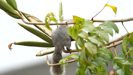squirrel is eating a seed of plant for food