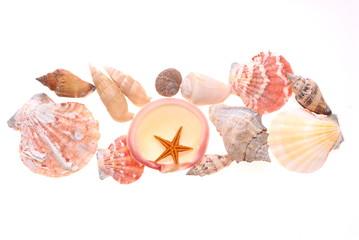 立体的にディスプレイそた貝殻.