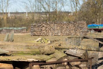 Brennholzstapel vor Holzstapel