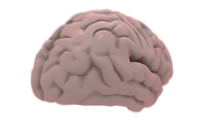 Brain, isolated on white, loops.