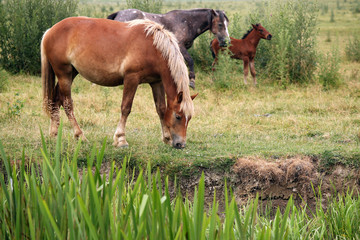 horses and foal on pasture