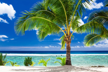 A single palm tree overlooking tropical beach on Cook Islands