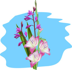 group of pink flowers on blue background