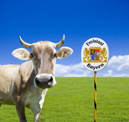 Kuh in Bayern