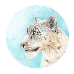 Handmade painting colored pencils snow leopard head