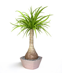 Palm Tree in 3D