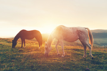 Horse Grazing the Grass at Sunrise in the Alps