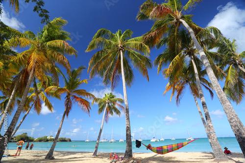 Papiers peints Plage plage rêve cocotier