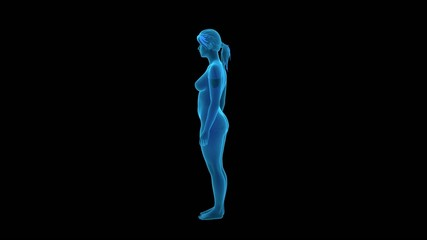 Female Body - x-ray view
