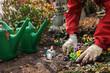 Leinwanddruck Bild - Planting flowers on a grave in spring
