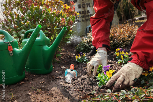 Planting flowers on a grave in spring - 80806511