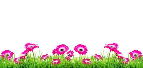 Rosa Blumen auf Wiese Hintergrund