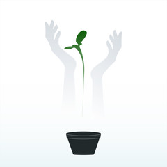 Young plant in the hands of a man