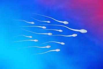 Spermien / Samenzelle