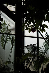 night glasshouse scary mystery