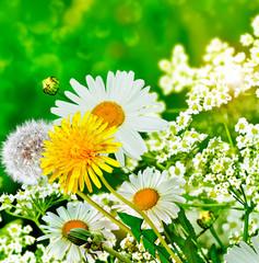 summer landscape. Wildflowers daisies