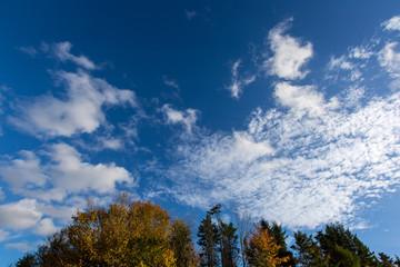 Colourful autumn trees against deep blue sky