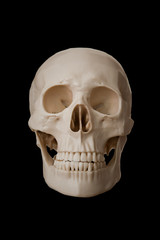 Human skull, isolated on black background