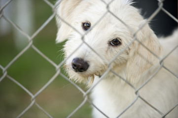Cute Puppy Dog Looking Through Fence