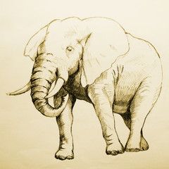 Elephant Sketch, raster version with tracing path