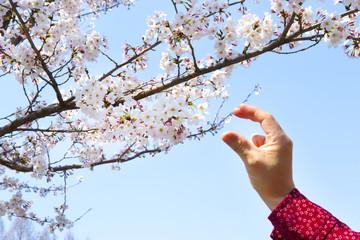 桜を捕ろうとする人