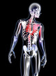 Anatomy - Chest Pain